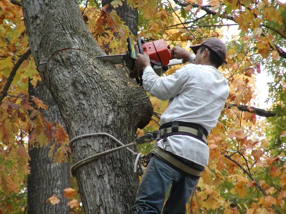 veteran staff member performing tree removal